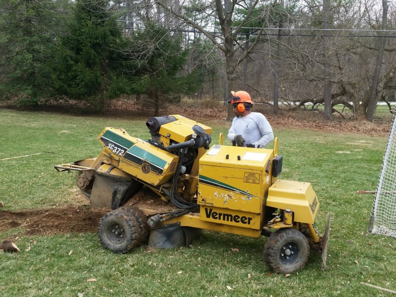 Best Tree Removal Service Providers